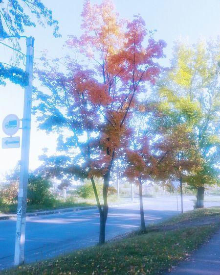 Authumn осень Харьков Природа
