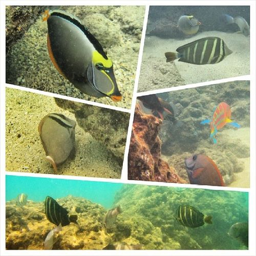 Another amazing adventure. Swimming with the Fishes and Snorkeling at Hanaumabay Lovingwhatido doingwhatilove hawaiilife luckywelivehawaii beachlifestyle beach 808 happylifey weekendadventure