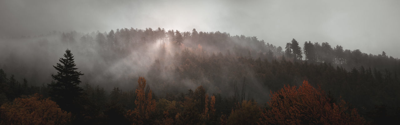 Panoramic view of forest against sky during autumn