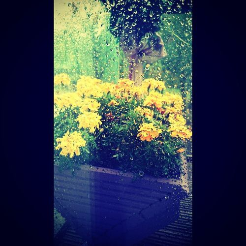 Raining Raindrops Raindropsonmywindow Flowers fallautumnlovelycolours