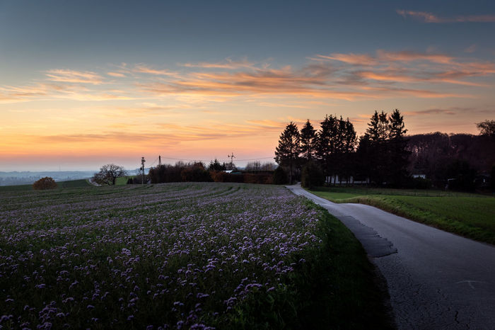 Plant Sky Sunset Beauty In Nature Cloud - Sky Tree Scenics - Nature Growth Nature Land Tranquil Scene Environment Tranquility Landscape Field Road Flower No People Flowering Plant Transportation Outdoors Purple