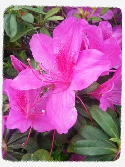 Flowers,macro