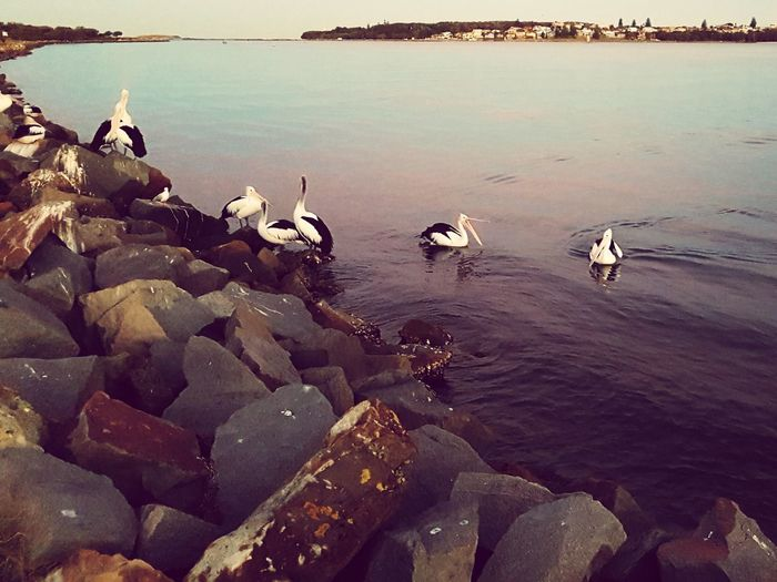 Sea Tranquility Outdoors Landscape No People Beach Swimming Sunset Day Water Sky Nature Bird Beauty In Nature Animal Themes Water's Edge Pelicans And Sunset Pelican Coastline Tranquil Scene Horizon Over Water Nature Dusky Shoreline Dusk Colours Travel Destinations