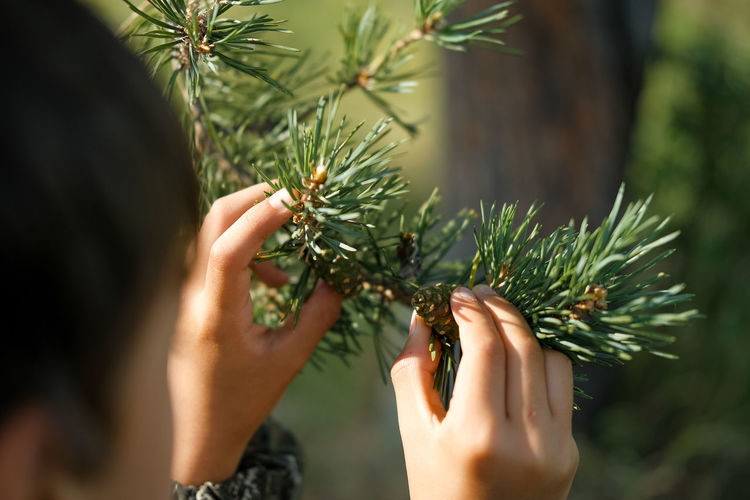 Close-up of woman holding spruce tree