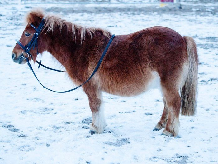 Animal Themes Domestic Animals Mammal One Animal Winter Snow Horse Cold Temperature Nature No People Outdoors Day