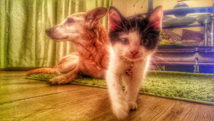 kitten power! Lol Catsoneyeem Fun #instagramers #TagsForLikes #food #smile #pretty #followme #nature #lol #dog #hair #onedirection #sunset Swag Throwbackth [ Hdr_Collection Lovecats