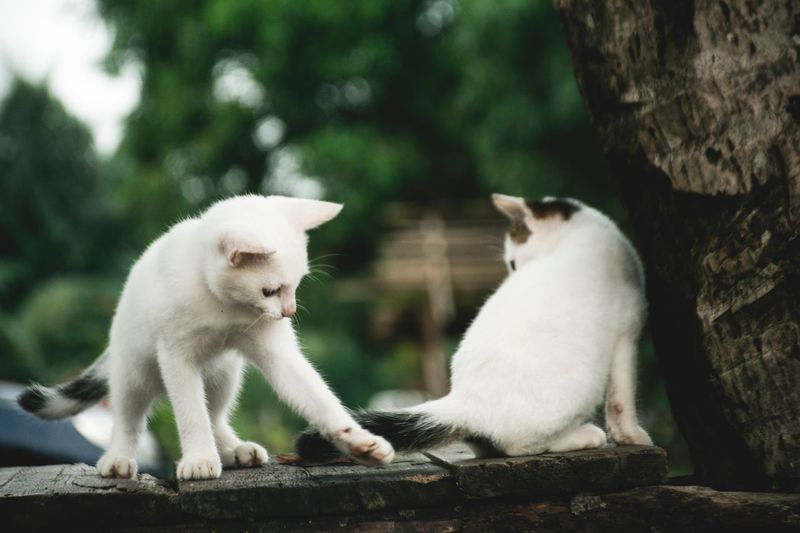 Domestic Cat Animal Themes Feline Pets Domestic Animals Mammal No People Sitting Day Outdoors Nature