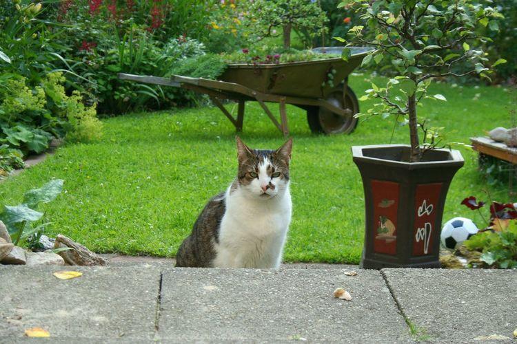 In My Garden beware of Cat 😊 Eyem Eyem Animal Lovers Eyem Cute Cats Cats Of EyeEm Cats No Edit No Filter