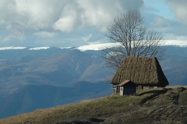 Abandoned barn, cabin with thatched roof in the mountains Apuseni Barn Homestead Romania Traditional House Transylvania Architecture Beauty In Nature Built Structure Cabin Day House Hut Landscape Lodge Mountains Nature No People Outdoors Scenics Sky Thatched Cottage Thatched Roof Tree Wooden