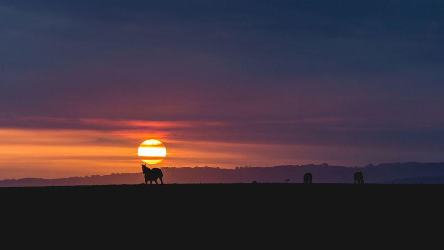 Silhouette horses on field against sky during sunset