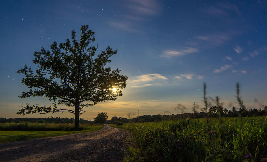 Agriculture Beauty In Nature Field Grass Growth Landscape Nature Night No People Outdoors Road Rural Scene Scenics Sky Sunset Tranquil Scene Tranquility Tree