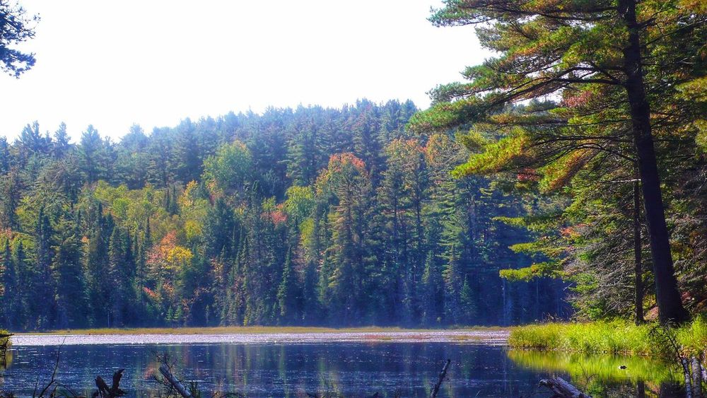 Tree Forest Nature Beauty In Nature Scenics Pine Tree Water Pinaceae Tranquil Scene WoodLand Lake Day Algonquin Algonquinprovincialpark Algonquin Park Ontario Outdoors Idyllic Tranquility Growth Landscape No People Mountain Sky Grass