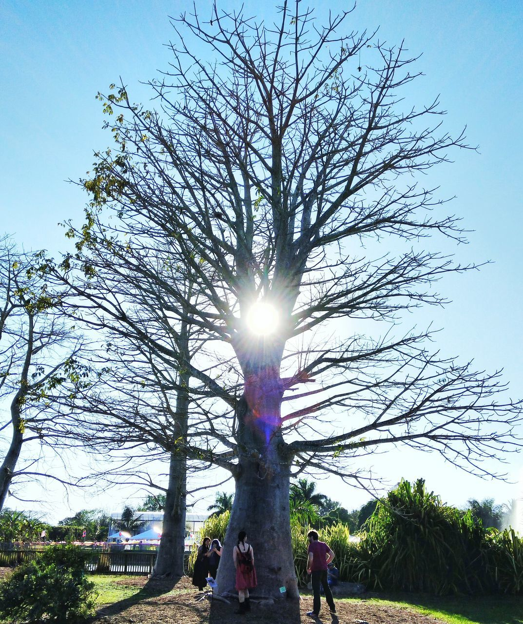 tree, lens flare, sunlight, sunbeam, sun, leisure activity, real people, day, sky, nature, outdoors, low angle view, growth, togetherness, men, childhood, clear sky, grass, beauty in nature, branch, people