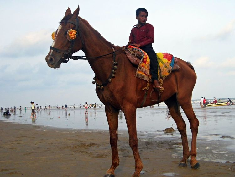 Life at Beach Animal Themes Balance Brown Day Domestic Animals Enjoyment Escapism Full Length Herbivorous Horse Livestock Mammal One Animal Outdoors Recreational Pursuit Side View Standing Two Animals Weekend Activities Working Animal