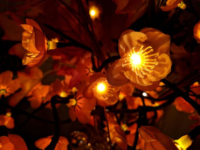 close up of illuminated seasonal decoration Illuminated Indoors  Lighting Decoration Taking Photos Close-up Low Light Low Light Photography Illuminated Flowers Fall Colors Holiday Decorations Indoor Photography Perspectives On Nature Seasonal Decorations On The Piano Floral Decoration