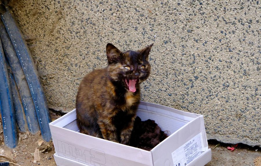 Animal Themes Cat In The Box Domestic Animals Looking At Camera Mouth Open One Animal Outdoors Pets Yawning