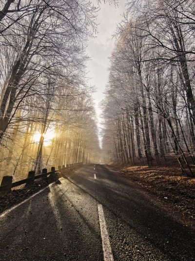 Empty road along bare trees in winter