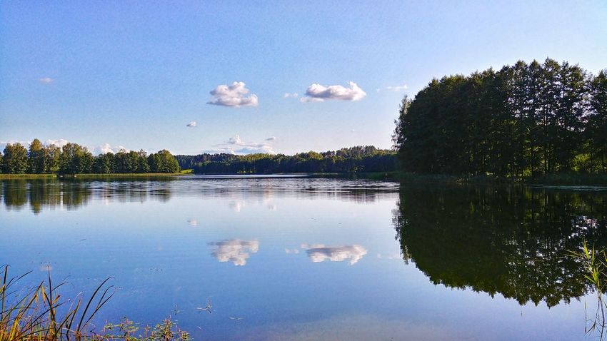reflection on water Reflection On Water Lithuania Summer Clouds Dzukija Trees Travel Romantic Sky Nature Lt Blue Sky No Waves Lizdai Lake Bird Tree Water Lake Reflection Clear Sky Sky Animal Themes