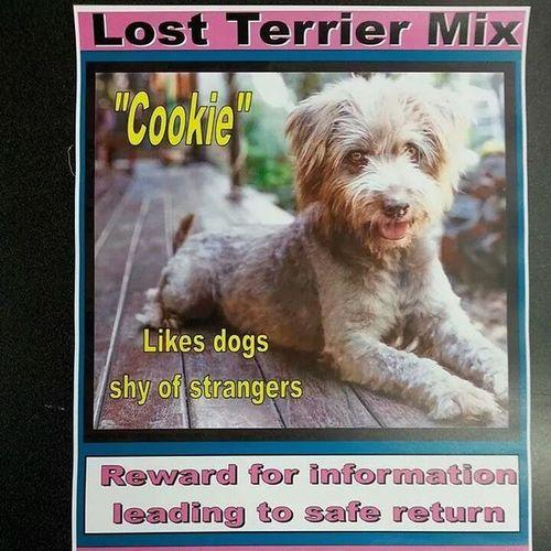 LOST Batterykemblepark DC Lostdog WashingtonDC washington americanu washington.d.c washington.dc americanuniversity @KareneW1951 @sanderella28 @AmericanU