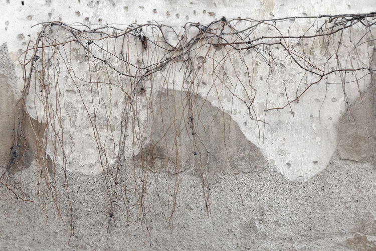 Close-up of bare tree against wall