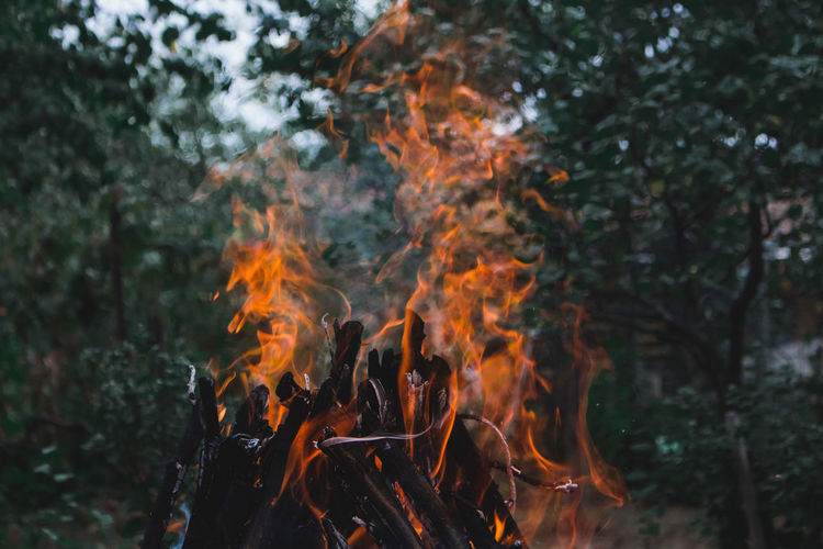 Close-up of fire in forest