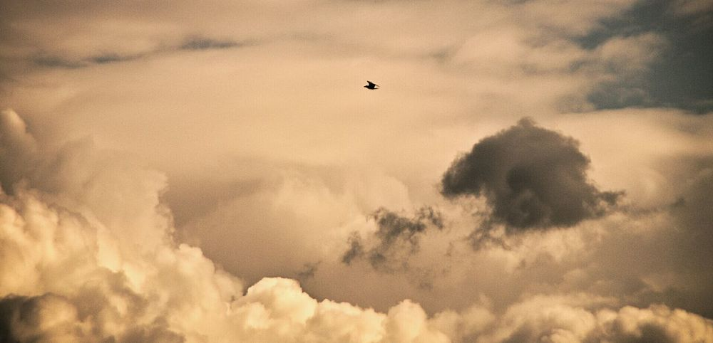 Clouds.....Nuvole Nature Metaponto Beauty In Nature Basilicata, Italy  Landscape Animal Themes Particular Light Nature Clouds And Sky Variation Clouds And Sky Seagulls In Flight Seagull In The Air Fresh On Eyem