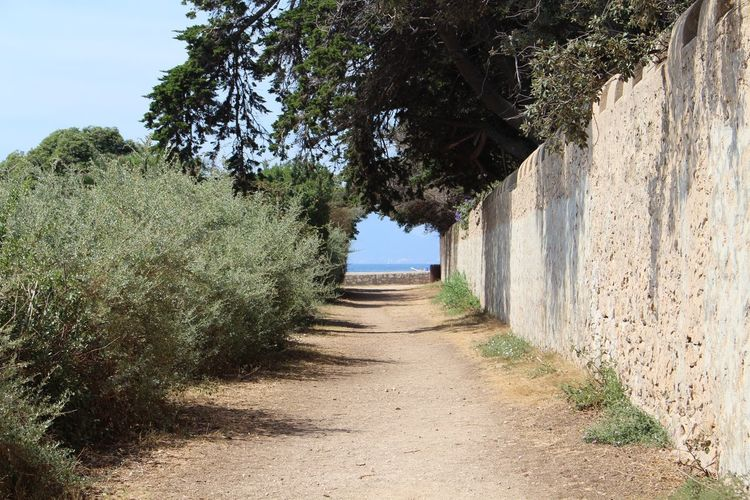 ile saint honorât, france The Way Forward Direction Plant Nature Tree Footpath Day No People Sunlight Diminishing Perspective Architecture Growth Built Structure Sky Land Outdoors Tranquility Beauty In Nature Road Transportation