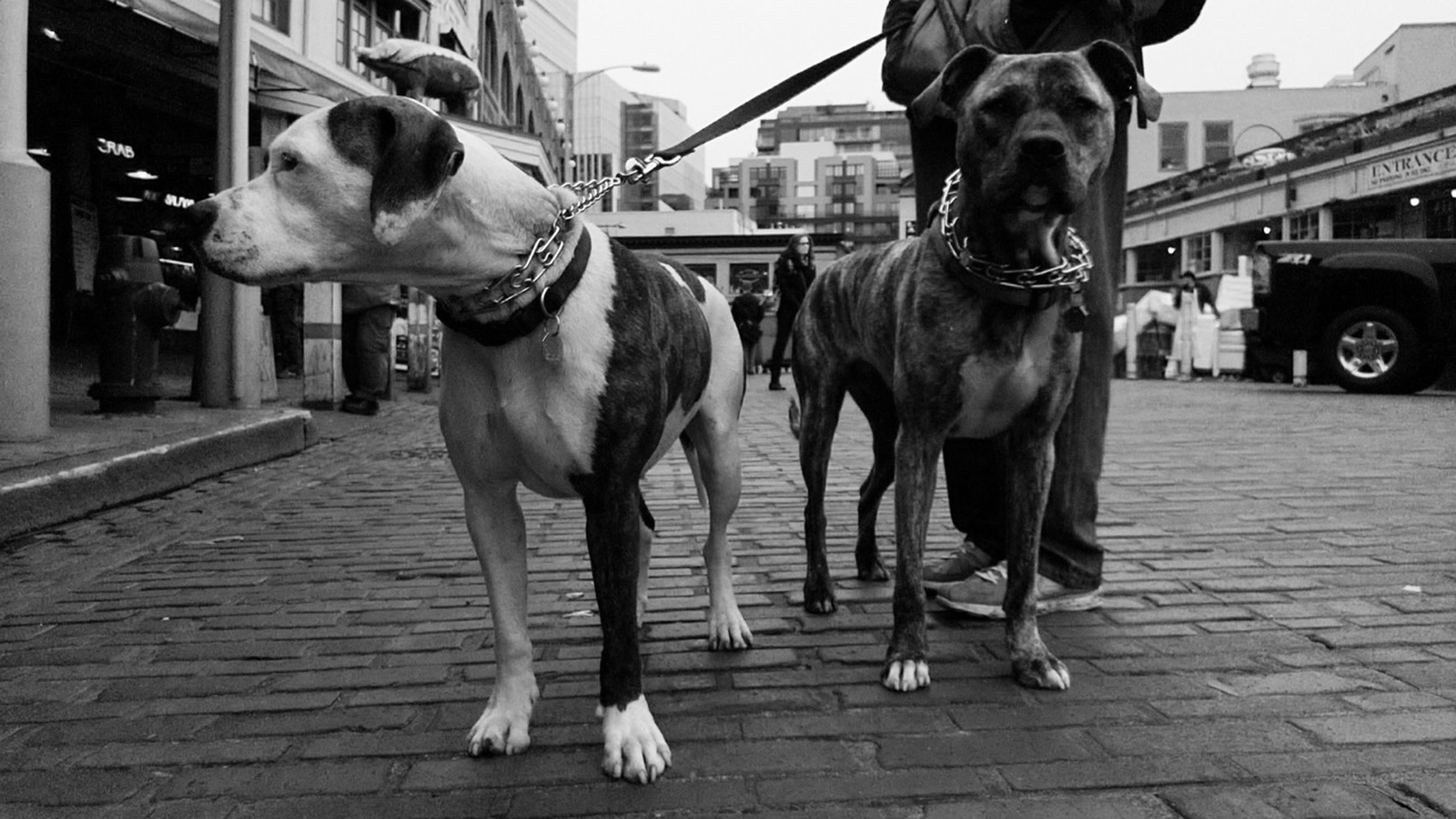 domestic animals, animal themes, dog, one animal, building exterior, mammal, pets, built structure, architecture, street, city, full length, pet leash, incidental people, sidewalk, standing, men, sunlight