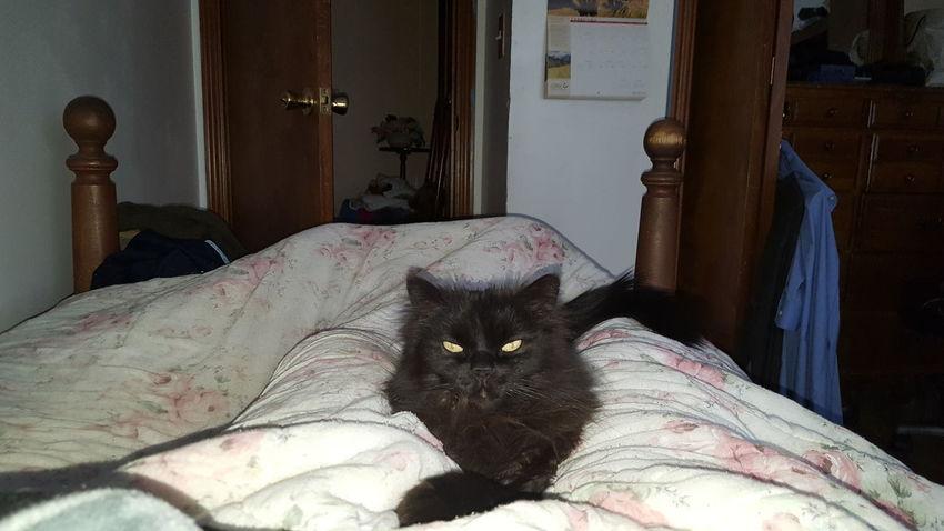 I let myself in Spooky Black Cat Evil Cat Evil Eyes
