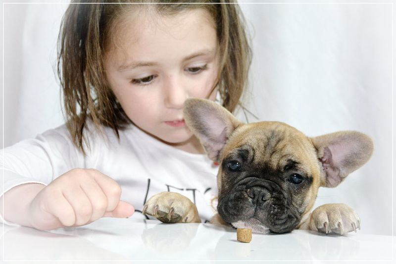 People Pets One Animal Cute Animal Themes One Person Domestic Animals Dog Young Animal Real People Mammal Indoors  Looking Down Portrait Close-up Day French Bulldog Bouledoguefrancais Frenchbulldog White Background Looking At Camera Happiness Children Roxane ❤ Happy
