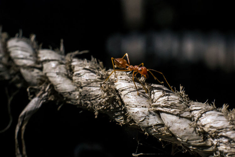 Close-Up Of Ant On Rope