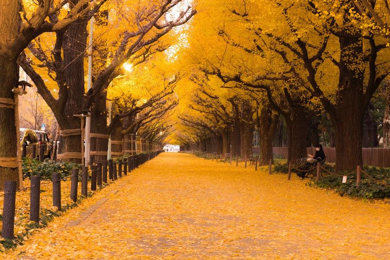 Autumn Tree Change Leaf Nature Yellow Walking Beauty In Nature Outdoors Single Lane Road Scenics The Way Forward Tranquility Road Full Length Branch People Day