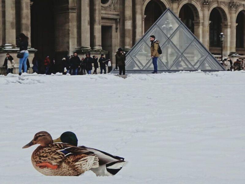 Paris Je T'aime Animal Wildlife Animal Reaction Winter Cold Temperature Snow Outdoors People