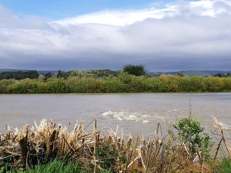 Manawatu Palmerston North Nz Riverside