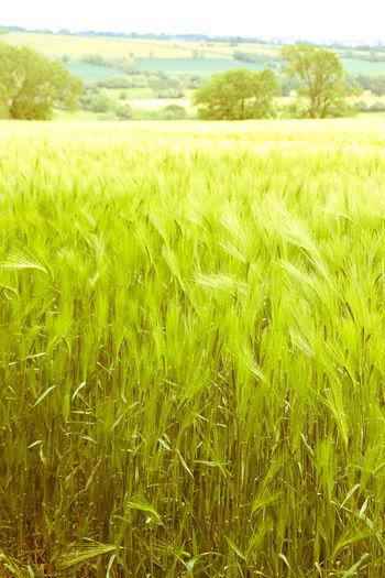Landscape Crop