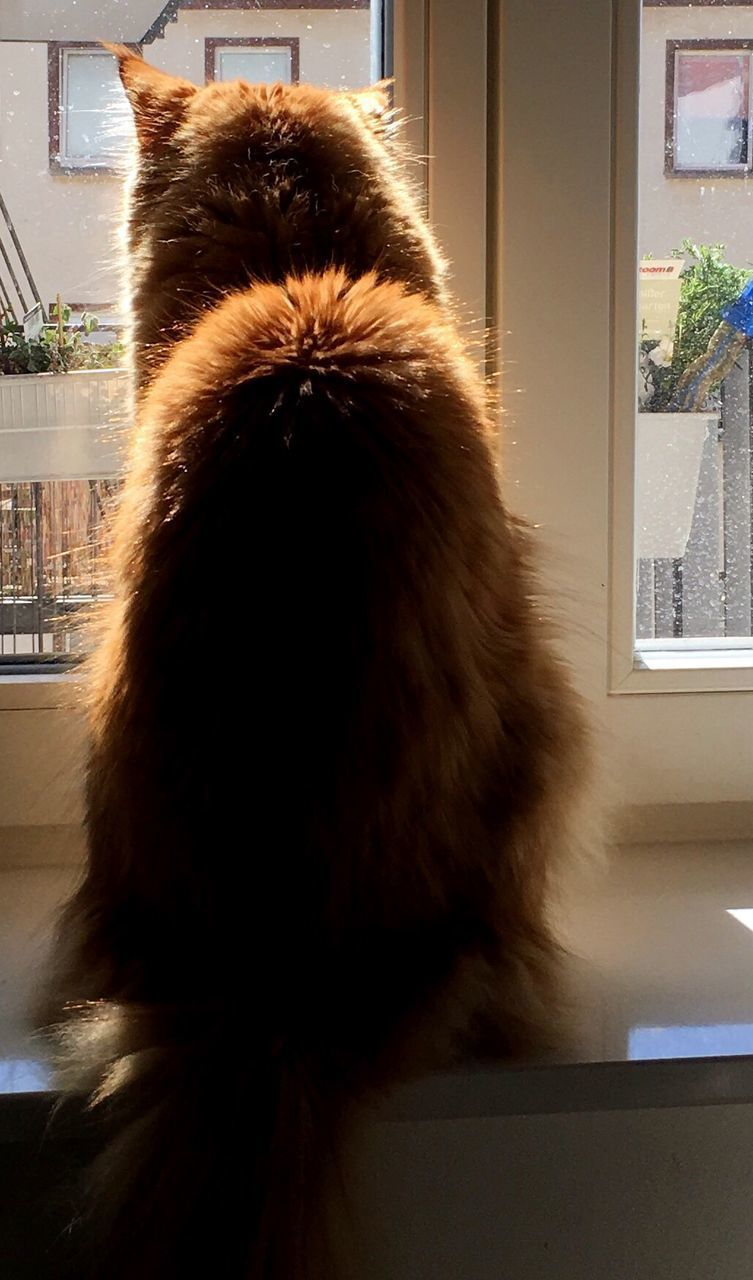 indoors, one animal, animal themes, mammal, pets, rear view, domestic animals, animal hair, domestic cat, close-up, no people, day