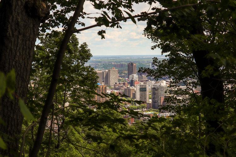 City Cityscape Tree Skyscraper Urban Skyline Water Window Sky Architecture Building Exterior