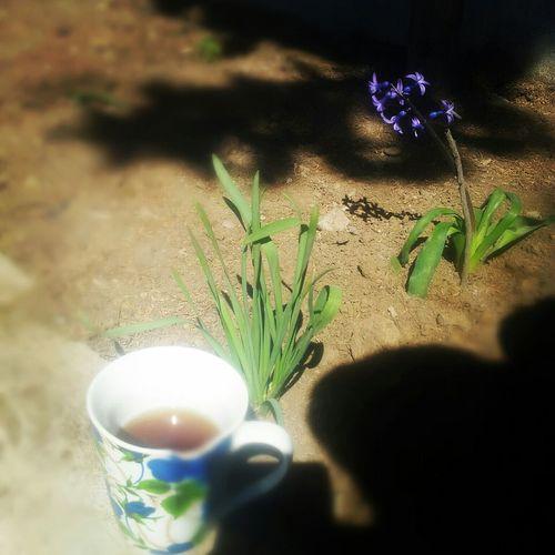 Sohrab Sepehri Tea Flower Sun Saeed Ebadzadeh Mosadegh66 SEM