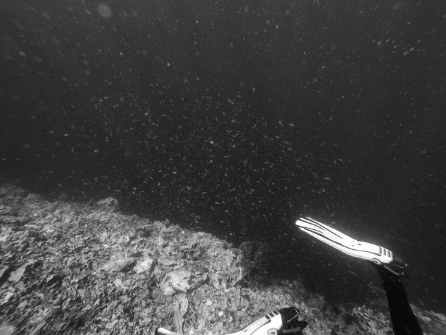 Wall dive on Pescador Island, Moalboal, Cebu (the Philippines) Adventure Animal Themes Animals In The Wild ASIA Black & White Cebu Exploring Extreme Sports Leisure Activity Lifestyles Majestic Nature Nature Outdoors Philippines Real People Scuba Diver Scuba Diving Sport Swimming Travel Travel Destinations Underwater Unrecognizable Person Vacations