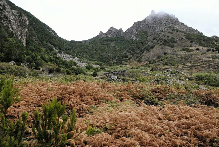 Landscape Nature Mountain Beauty In Nature Tranquility No People Tropical Tenerife Taganana Anaga Mountains