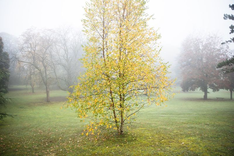 Scenic view of tree in foggy weather