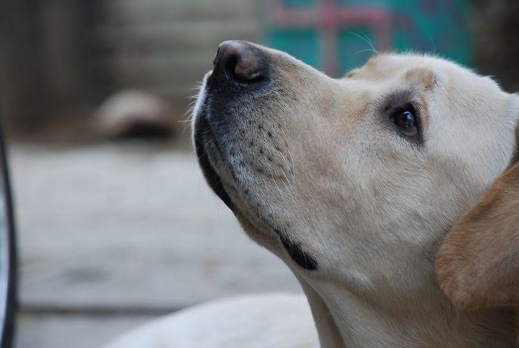 Suyashclicks One Animal Mammal Animal Animal Themes Dog Canine Domestic Domestic Animals Pets Close-up No People Portrait