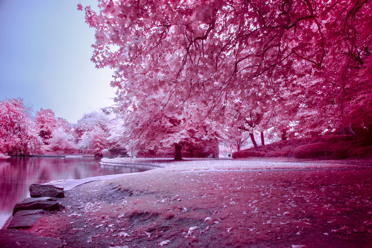 St. Stephen's Green in Dublin. infrared photography. Abundance Beauty In Nature Branch Change Cold Cold Temperature Color Manipulation Day Dublin Frozen Growth Infrared Ireland Lens Flare Nature Outdoors Park Park - Man Made Space Postprocessing Season  Snow St. Stephens Green Sunny Tree Weather Winter
