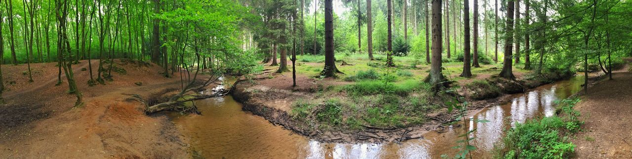 Forest Panorama Nature Nature_collection Landscape Landscape_Collection Creek Water Tree Trees Beauty In Nature Beautiful Beautiful Nature EyeEm Nature Lover EyeEm Best Shots