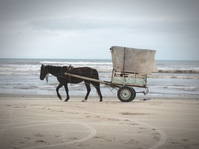 Horse cart on beach in brazil
