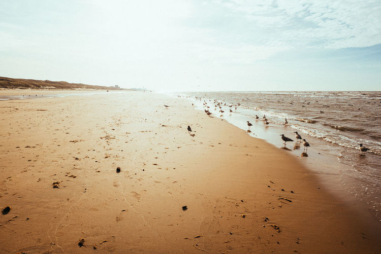 Beach with November sun Water Land Sea Beach Sky Sand Beauty In Nature Tranquility Tranquil Scene Nature Day Non-urban Scene No People Outdoors Sea And Sky Sea View Seascape Sea Bird Sun Sunlight Landscape Nature Outside Birds Bright