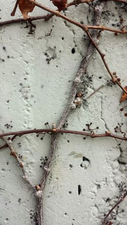 Plant Plants Wood Vinewood Vines Vine Nature Nature_collection Nature Photography Nature Textures Nature_ Collection  Vine on a wall