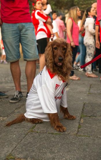 Ponte De Lima Dog Suporter Benfica Coker