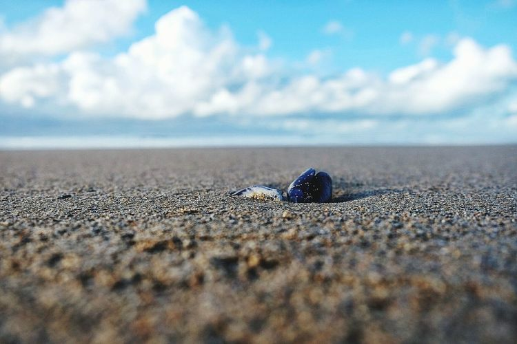 Close-up of crab on sand at beach against sky