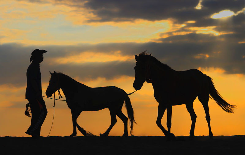 Silhouette man riding horse on beach against sky during sunset